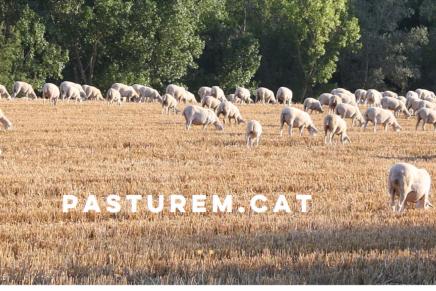 Pasturem.cat- divulgació del producte de ramats catalans